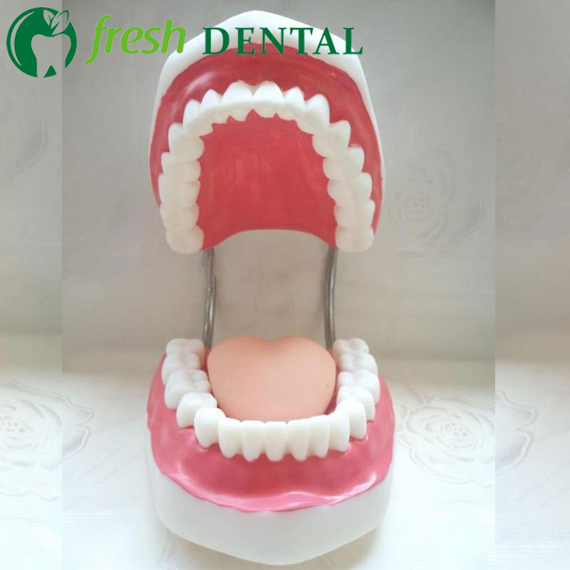 1pc Dental Tooth Models Brushing Teaching guide Model 6x 28 teeth Tooth structure Oral care model SL714