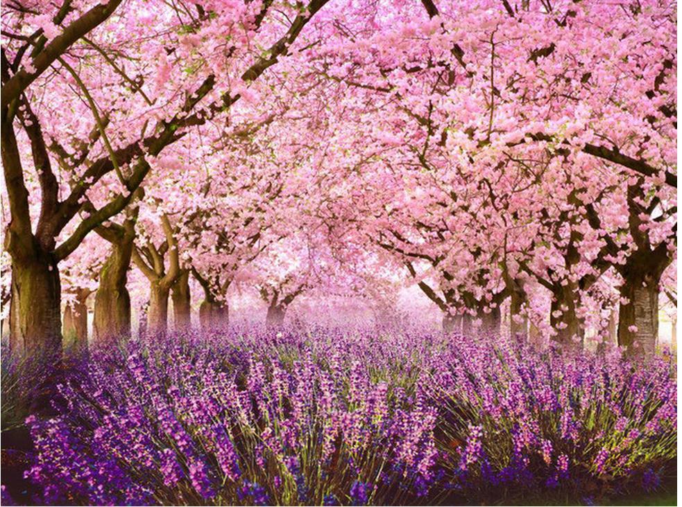 Wallpaper Bunga Sakura Gugur