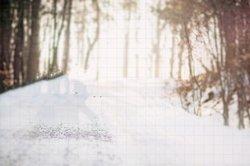 Drzewo dorosłych na świeżym powietrzu na świeżym powietrzu śnieg las bokeh teł wysokiej jakości wydruku komputerowego dzieci dzieci tło