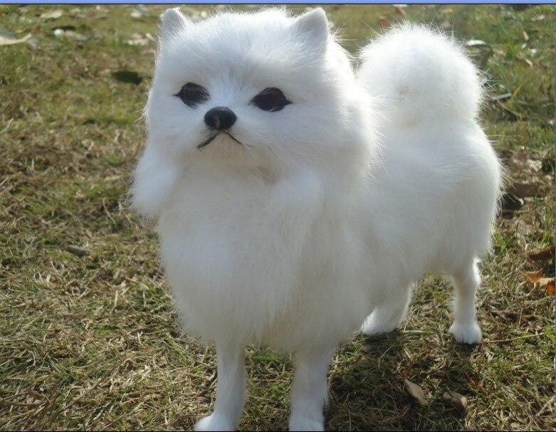 about 23x20cm simulation dog white Pomeranian toy model,polyethylene & furs resin handicraft, birthday gift h1002