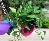 Бесплатная доставка, 2 шт./лот, od20cm. автоматическая вода лежак балкон горшок висит паук растений. петуния горшок, красочные. гидропоники