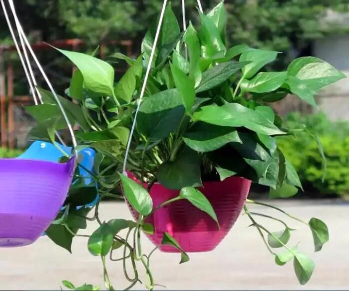 Desain Taman Bunga Gantung  us 24 28 16 off 2 set lot od20cm otomatis air lounger balkon pot bunga gantung spider tanaman petunia pot berwarna warni hidroponik in bunga pot