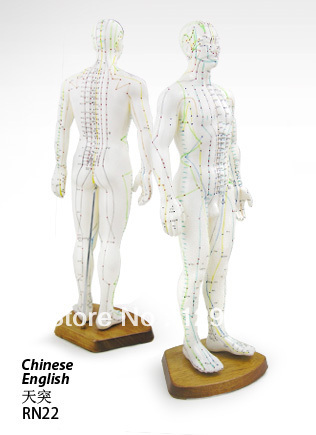 Free Shipping English Medical Male Human Body Acupuncture Meridians Model English 50CM