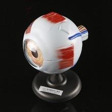 6X анатомические модели глаз съемная модель глазного яблока анатомическое биомедицинское природное биологическое оборудование средства для глаз