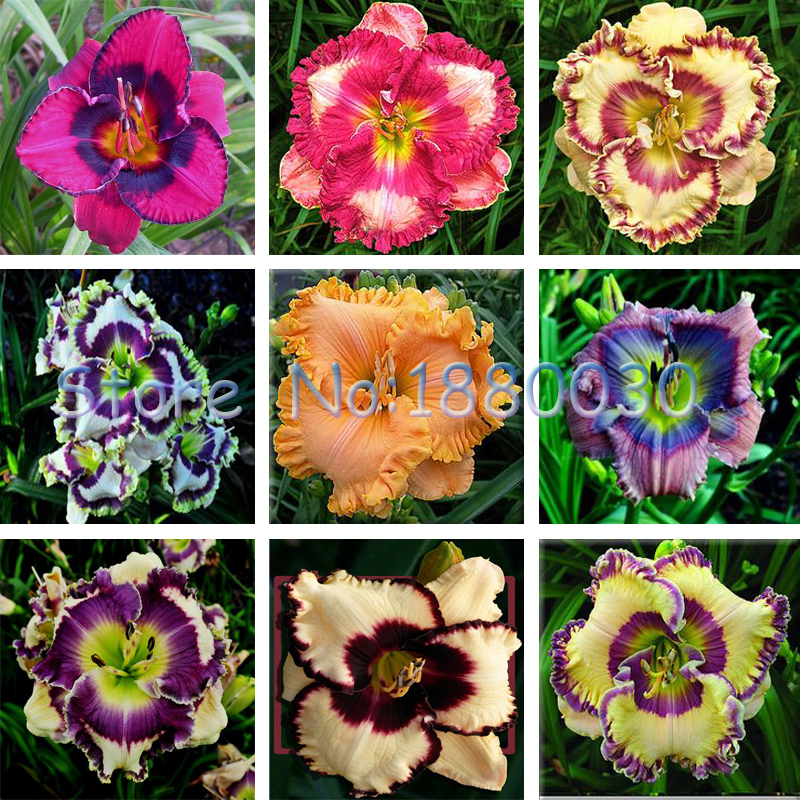 Photos of different flowers flowers gallery for What makes flowers different colors