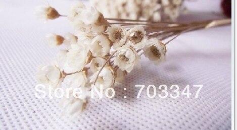 Горячая Распродажа!(1800 шт./лот) Мини-сушеные цветы для украшения