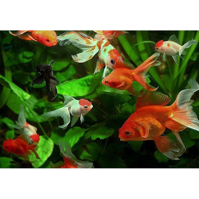 katze mit fisch malen, online-shop moderne bild an der wand acrylfarbe diy malen nach, Design ideen