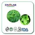 New nature jiaogulan/ Gynostemma Extract powder Gypenoside 80%/Gynostemma Pentaphyllum Leaf Extract 80% Gypenosides 1000g
