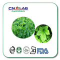 Nueva naturaleza jiaogulan/polvo de Extracto de Gynostemma Gypenoside 80%/Extracto De Hoja De 80% Gypenosides Gynostemma Pentaphyllum 1000g