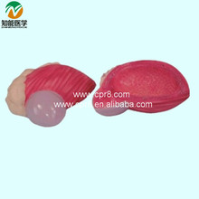 Bladder Model(Plastic Bladder) BIX-A1062 WBW420