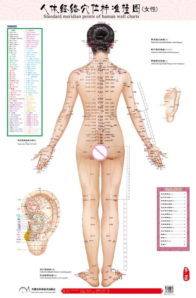 Fein Menschliche Anatomie Hd Fotos - Anatomie Ideen - finotti.info