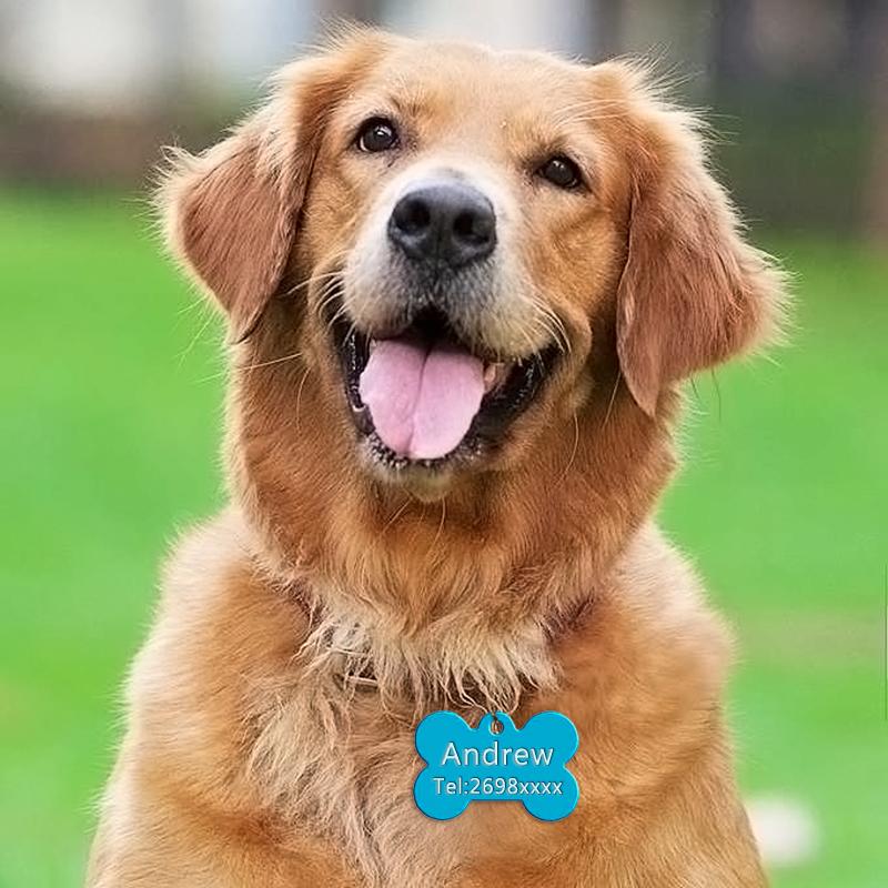 Placas de identificación para perros, con nombre y teléfono 5