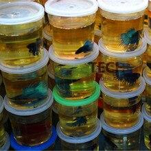 Высокое качество Betta дом мини бои Бетта аквариум(рыба не входит в комплект) Peceras Para Bettas танк