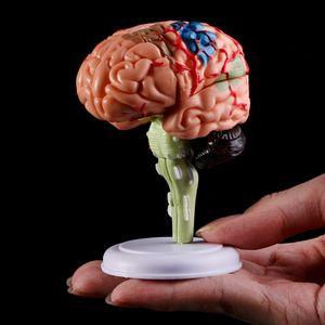 Image 5 - 4D分解解剖人間の脳モデル解剖医療教育ツール彫像彫刻医学部使用