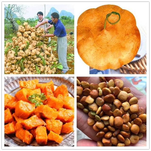 20 pçs/saco plantas de batata Doce, inhame feijão jardim frutas e legumes bonsai para Casa Jardim planta