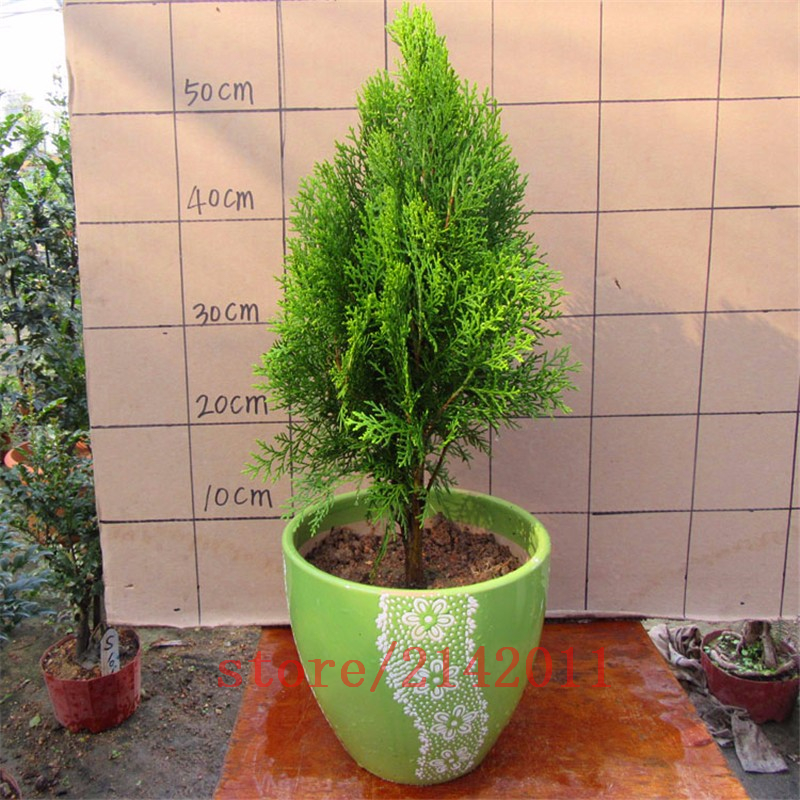 Popular door plant buy cheap door plant lots from china for Indoor gardening market size
