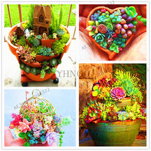 207pcs/bag mix lithops flores rare succulent plantas Ass flower plante Living Stone bonsai mini garden plant.(China)