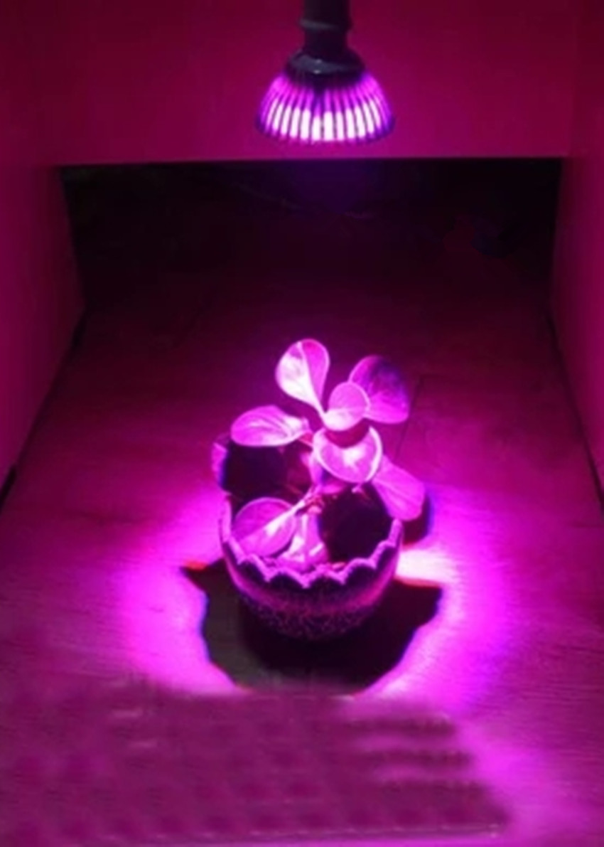 LED Grow Light lights up red and blue flowers Succulents shed light photosynthesis houseplant
