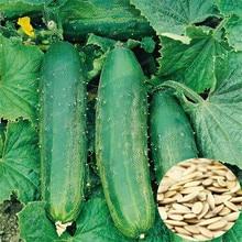 Green Cucumber Cucumis Sativus Linn Cucumber Vegetable bonsai Grow Faster - 20 pcs particles