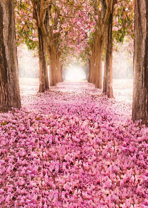 Pink Boulevard printed newborn birthday photo backdrops Art fabric backdrop for studio children  photography backgrounds D-9779 fairy tale arch printed newborn baby photo backdrops art fabric backdrop for studio children photography backgrounds d 9822