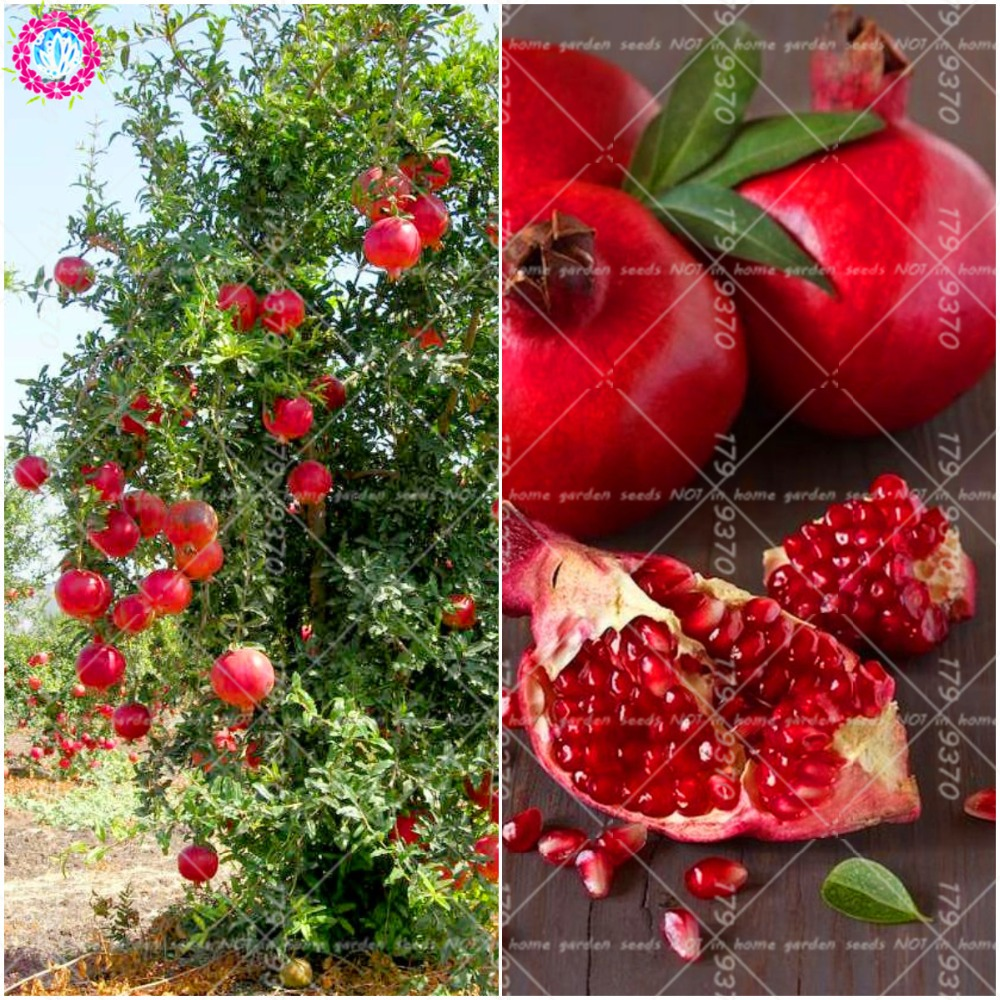 50pcs Bonsai Pomegranate Punica granatum very sweet Delicious fruit  outdoor berry Tree for home garden plants