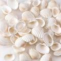30 г/пакет из натурального белого ракушка, маленькая бижутерия из природных материалов, крафтовое украшение, натуральные раковины из ракови...