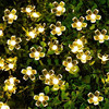 50 LEDS Peach Blossom Flower Solar Lamp 7M Power LED String Fairy Lights Solar Garlands Garden Christmas Decor For Outdoor promo
