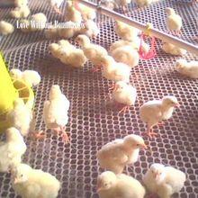 Коврики и одеяла для домашних животных чистый коврик для кровати птица курица утка хомяк норка белка кровать гнездо куры, утки, петухи, куры полая подкладка-сетка
