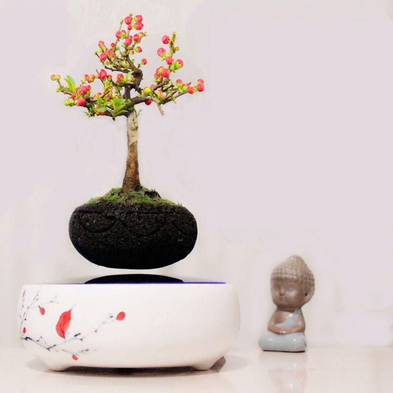 culture pot achetez des lots petit prix culture pot en provenance de fournisseurs chinois. Black Bedroom Furniture Sets. Home Design Ideas