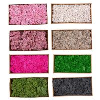 Beautiful 500g/Box Moss Plant Flowers Long Lasting Preserved Dried Craft Flower DIY Home Wedding Party Decor XH8Z JA11