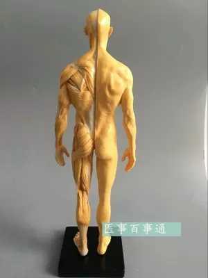 Escultura de resina CG de 30 cm, modelo masculino, anatomía musculoesquelética, estructura del cuerpo humano, modelo artístico, Compras gratis