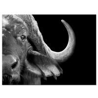Canvas Wall Art African Cape Buffalo Black and White Animal Picture Print on Canvas Abstract Artwork For Home Decor 24x32