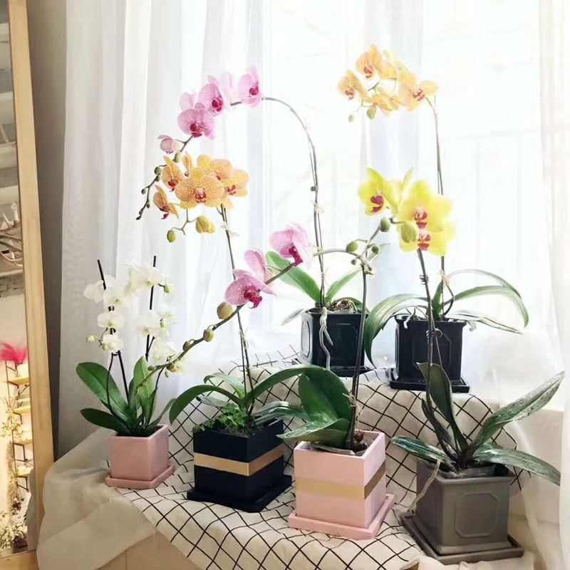 Décor à la maison carré ciment pot de fleur moderne bureau artisanat plantes succulentes béton planteur pot avec plateau