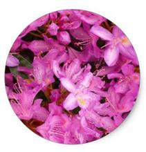 1.5inch rhododendron classic round sticker