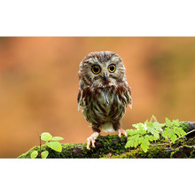 Full 5D DIY Diamond Painting Animal Diamond Embroidery Owl Cross Stitch 3D Mosaic Home Decoration YY(China)