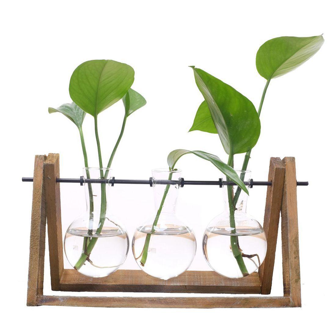 Pflanze Terrarien mit Holzständer Glas Vase für Heimtextilien, Scindapsus Container (3 Terrarien)