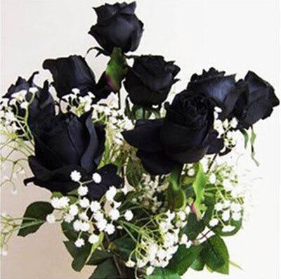 эухарис цветы комнатные купить на алиэкспресс