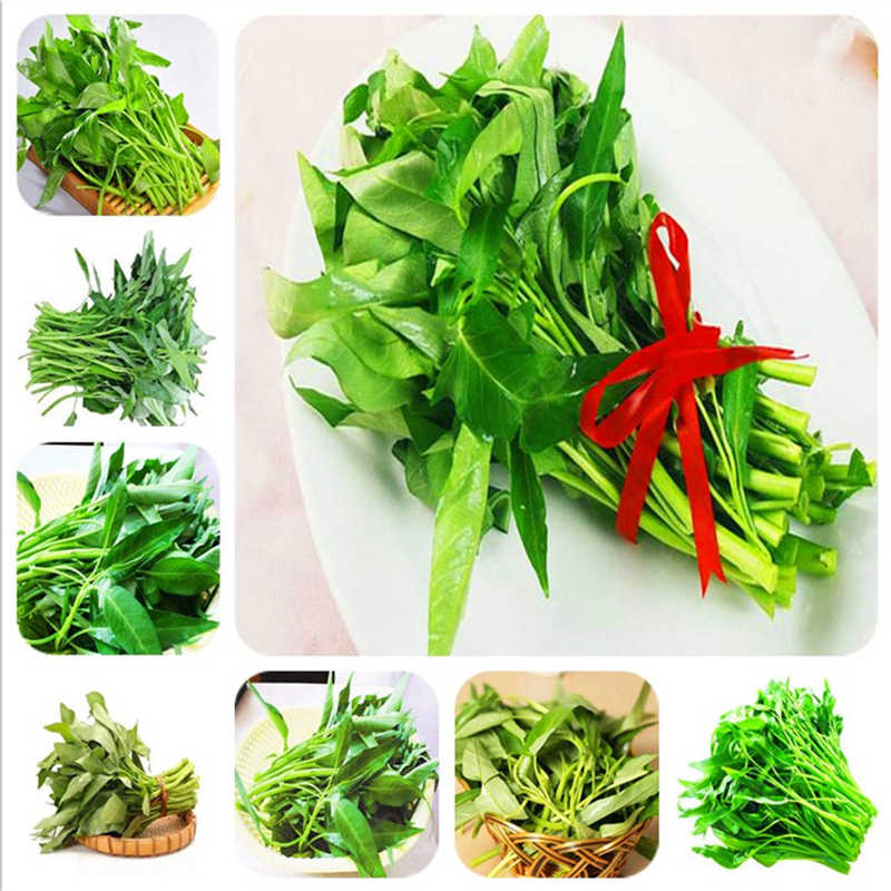 500pcs water spinach vegetable bonsai, Chinese spinach or watercress limited time promotion spinach bonsai organic green edible