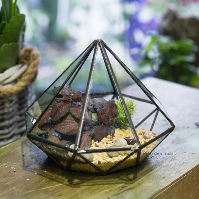 Modern Classic Octahedral Glass Geometric Terrarium Succulent Fern