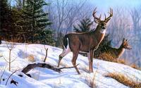 animals deer art nature paintings winter snow mountain 4' Size Home Decoration Canvas Poster Print