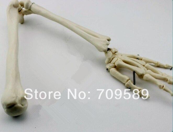 ISO Life-Size Рук Совместное Модель, верхней Конечности Кости Модель