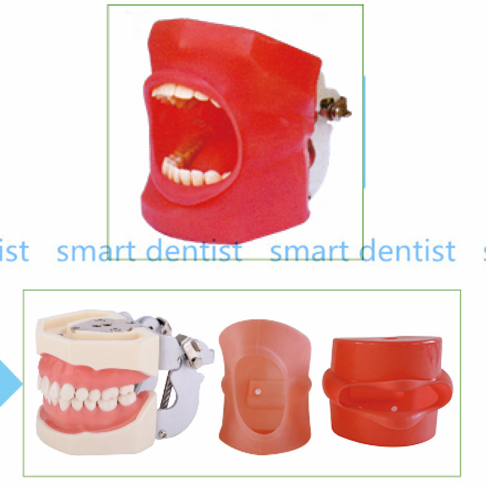 Good Quality Oral Simulation Practice System Dental Phantom Head for Dental School