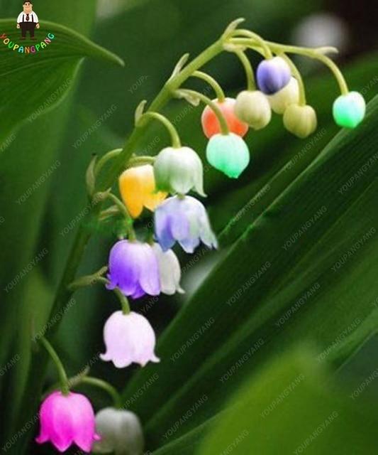 100 pz Giglio Della Valle Fiore piante Al Coperto Rare Campana Orchidea piante Rich Aroma Bonsai Fiori Carino E Bella piante