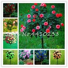 Mini Rose Tree Mua Lo Mini Rose Tree Gia Rẻ Từ Nha Cung Cấp
