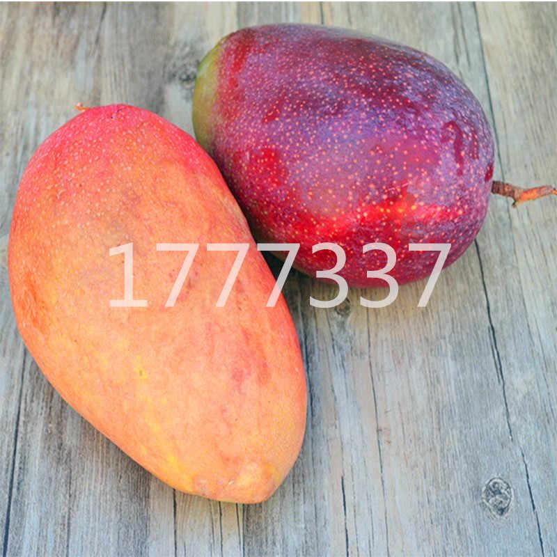 1 pçs/saco planta de árvore de fruto de manga gigante doce bonsai planta tropical rara fruta fresca suculenta bonsai planta para o plantio de jardim