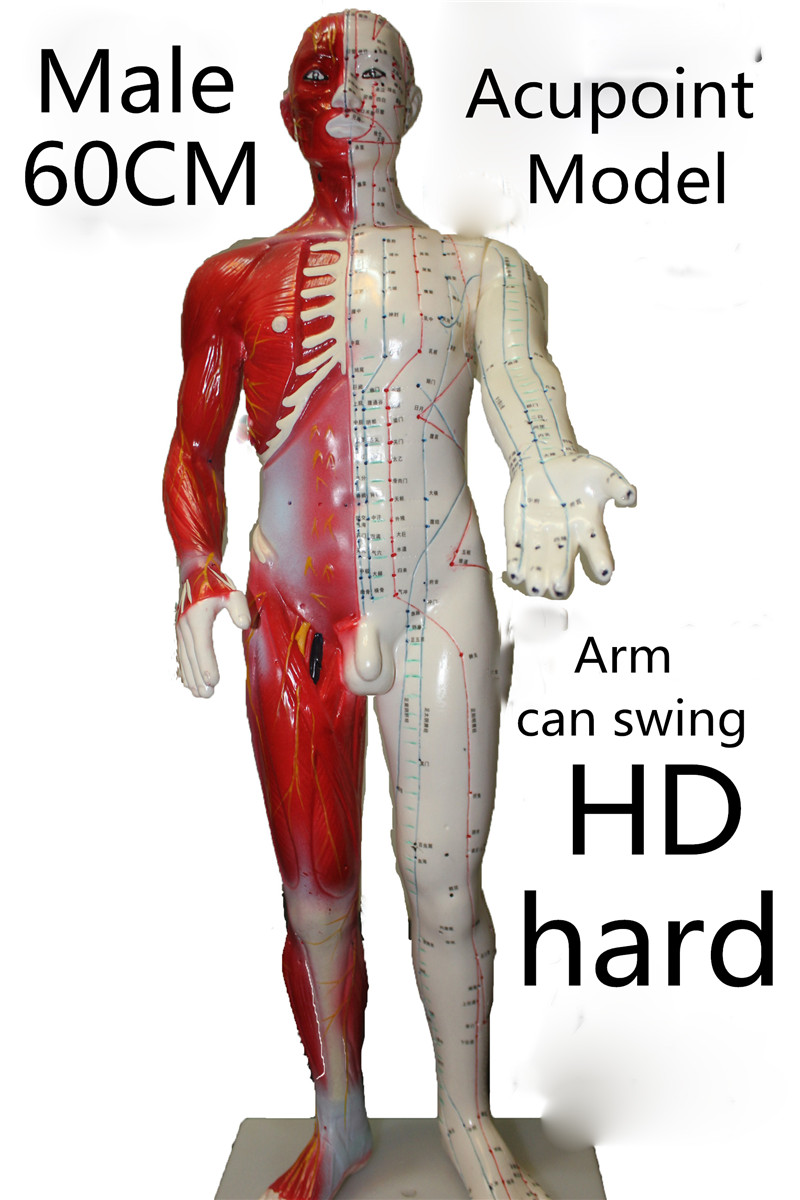 HD hard 60 cm Male Human Acupuncture Acupoint Model Muscle Anatomy ...