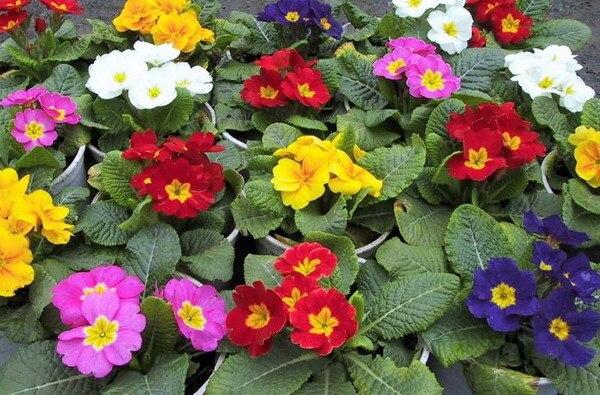 Resultado de imagem para sementes de flores