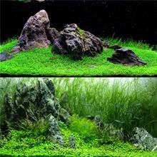 Семена аквариумных растений, гелиантус, каллитрихоиды, легко растущая вода, растения, трава, аквариум, пейзаж, украшение, Декор
