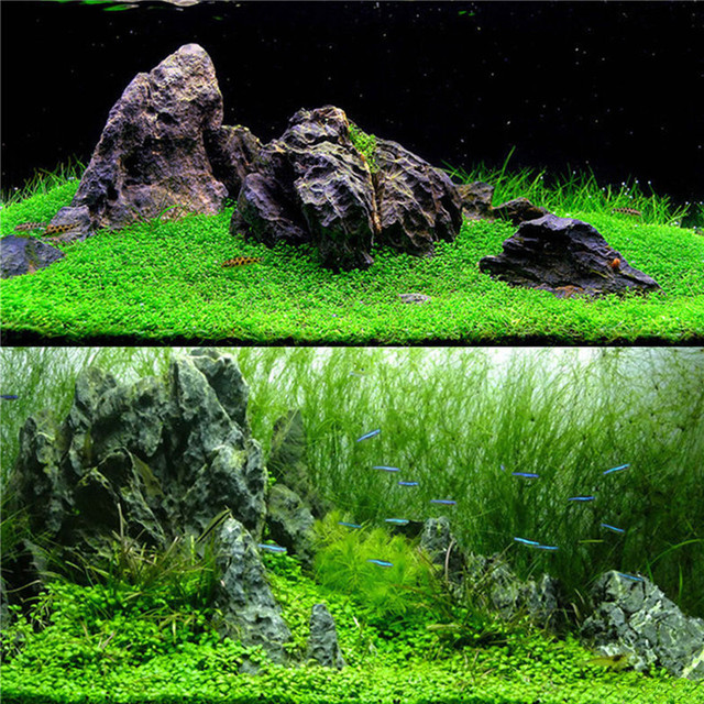 Aquarium Plant Seeds - Waterscape Fish Tank Decoration  1