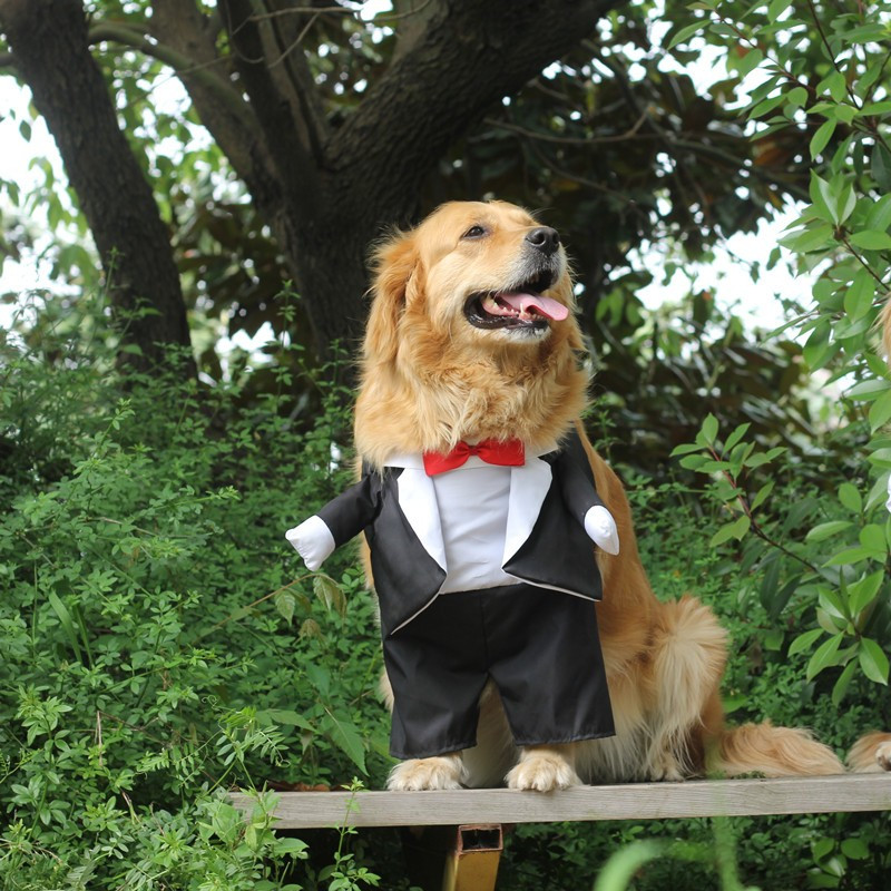 Dog Costume For Wedding Party (8)